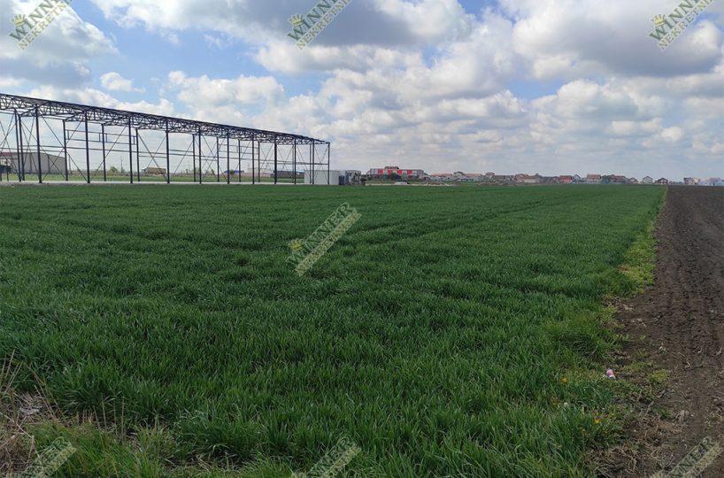 Poljoprivredno Zemljiste Njiva Zemun, Batajnica, Busije, uknjizeno, asfalt, struja, voda, njiva, agencija winner nekretnine placevi, gradsko gradjevinsko